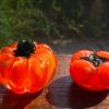 ガラス ペーパーウェイト2点  かぼちゃ&柿  ハロウィンにも g-152