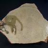 大ぶり古唐津陶片 釉薬の変化で猫を表現した珍品 t-1281